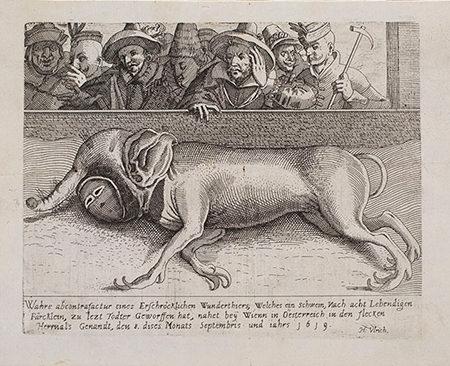 Engraving of a monstrous stillborn piglet